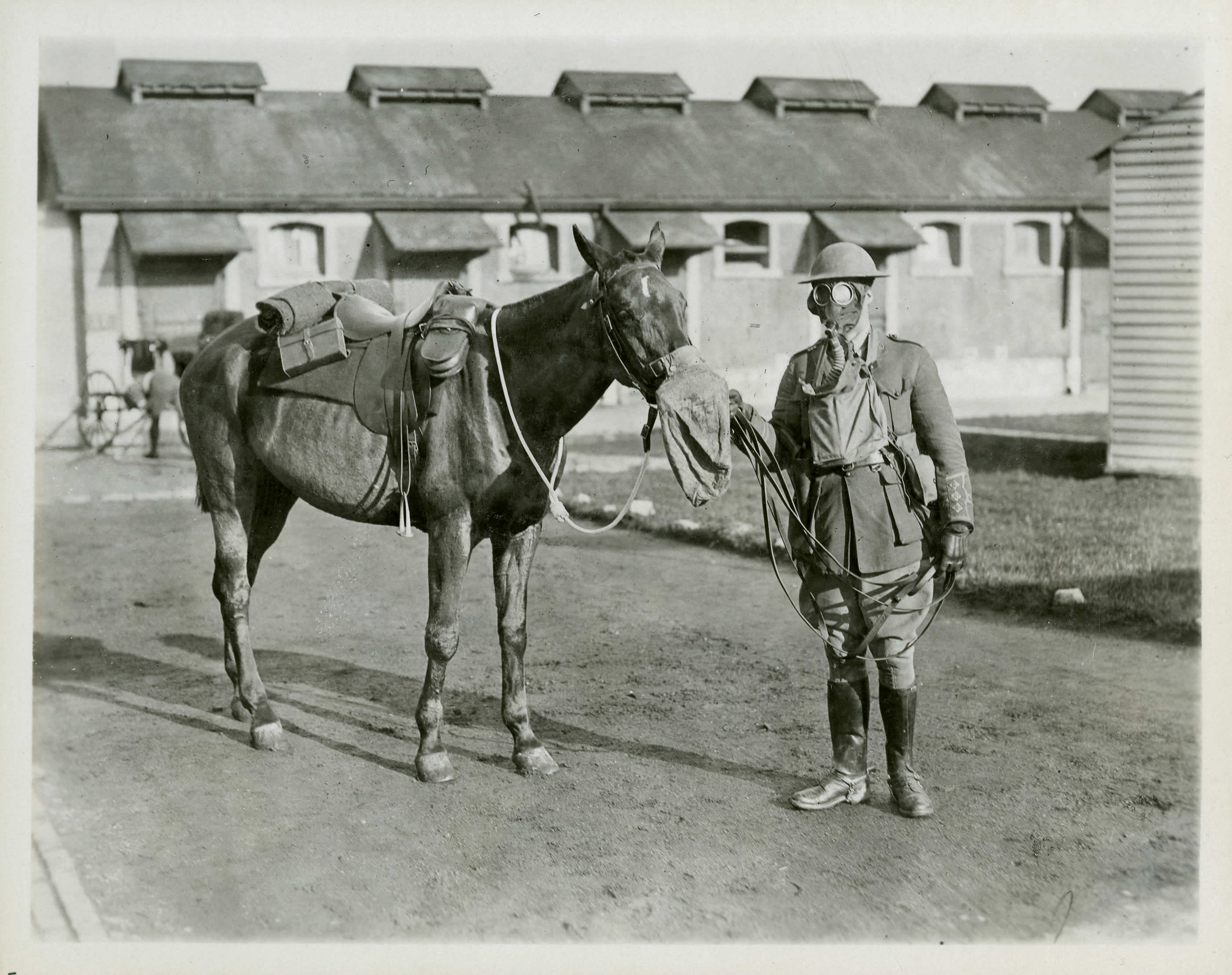 Protecting Soldiers and Horses