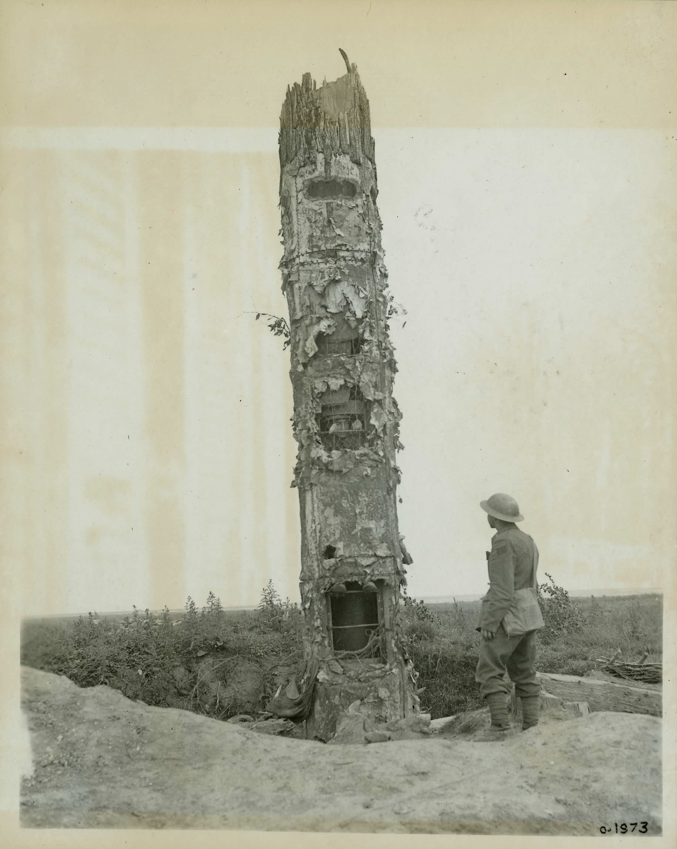 Tree Trunk Observation Post