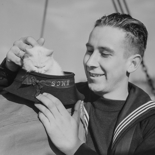 A sailor petting his ship's mascot, a white cat, that is perched in his cap.